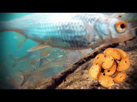 РЕАКЦИЯ РЫБЫ НА СУХАРИ И МОТЫЛЯ Подводная съемка [зимняя рыбалка 2018]