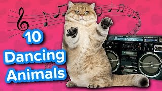Ten Dancing Animals // Funny Animal Compilation