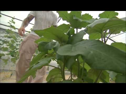 3 Boys Farm, Award-winning Organic & Hydroponic Vegetable Growers