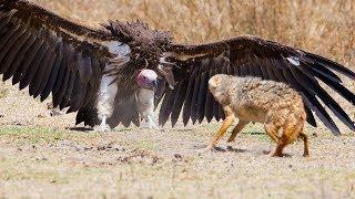 दुनियां के 10 सबसे खतरनाक चिड़ियाँ । Top 10 Most Dangerous Birds In The World  