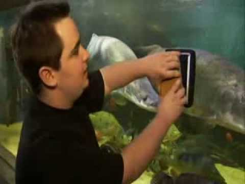 John Marcus Monstrous 10000 Gallon Aquarium