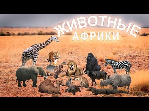 Африканские животные и их детёныши. Звуки африканских животных. Развивающее видео.