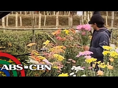 Flower prices rise after Typhoon Lando