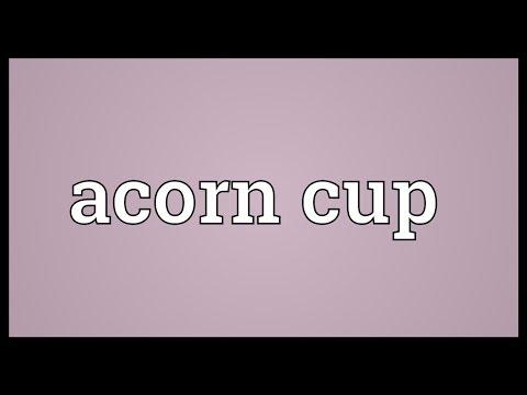 Header of acorn cup