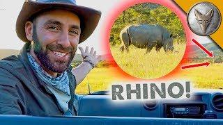 Ultimate Safari Adventure!