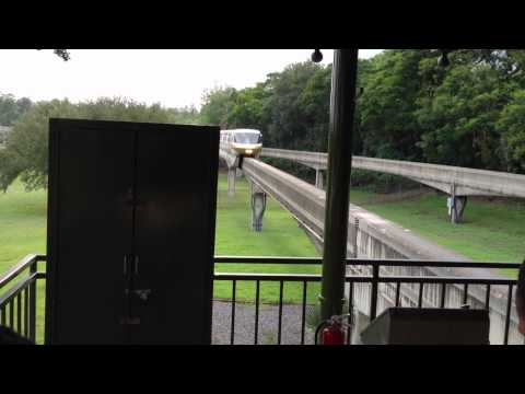 Squirrel halts Train