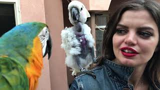 HOPE MEETS ROCKY FOR THE FIRST TIME! *MARLENE MC'COHEN'S MACAW*