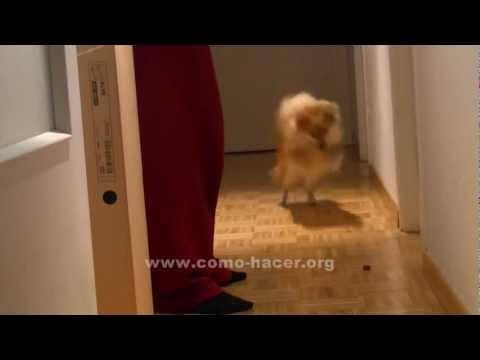 A la de tres - Trucos de perros ( HAY QUE VERLO ! )