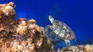 Exploring The Coral Reef John Grout Brian Langill Naturescapes Music