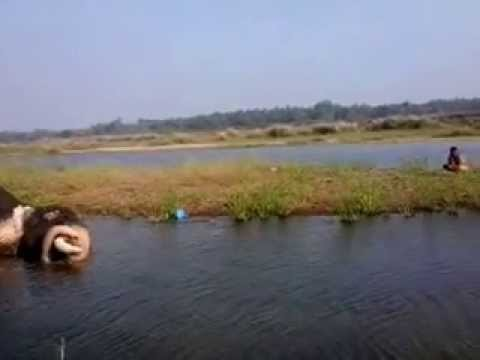Nadan Kuli Scene video