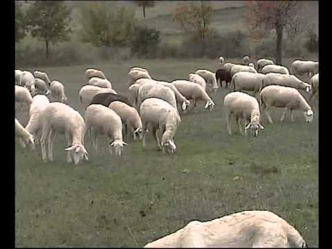 Qentë dhe delet e Xhemë Rifat Krasniqit në Temeqinë 2