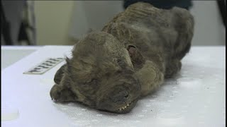 18,000-year-old puppy found preserved in Russia