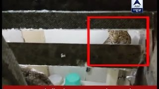 Leopard enters Nainital hotel, stuns couple on vacation