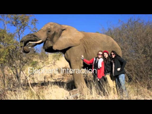 ISV South African Wildlife Vet Project