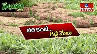 మేడ్చల్ జిల్లాలో విస్తృతంగా గడ్డి సాగు | Grass Crop Cultivation | Medchal | Nela Talli | hmtv