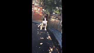 My funny dog 🤣🤪