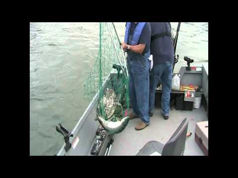 Cowlitz River 2011 Fall Chinook - Silver Coho Salmon season underway