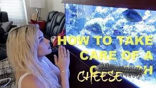 HOW TO CARE FOR A COWFISH (Featuring Our God: Cheese)