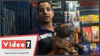 بالفيديو.. تعرف على أقوى طرق تدريب الكلاب على الحراسة والهجوم على اللصوص