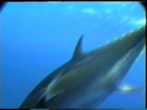 BIG GAME FISHING TEAM 4TUNA - BLUEFIN FISHING