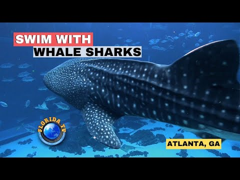 Swim With Whale Sharks Georgia Aquarium ATLANTA HD