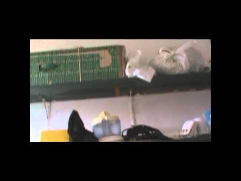 EVS HOUSE - Os Quatro Cantos do Cisne 2010-PT-2