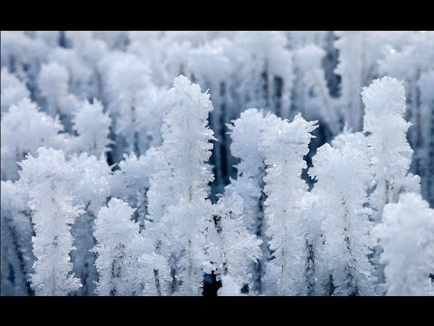 2015-2035 Mini Ice Age | Winter Wheat Kill-Off From Extreme Cold in November (17)