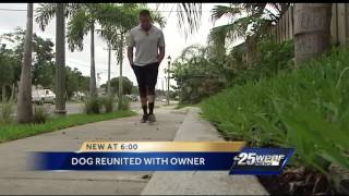 Dog stolen a year ago reunited with owner days before euthanization