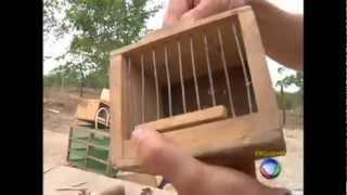 PARTE 2- Repórter acompanha operação do IBAMA que combate crime de tráfico de animais