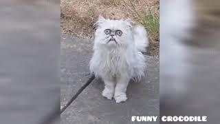 Смешные животные. До слез. Funny animals. #смешныеживотные #funnyanimals