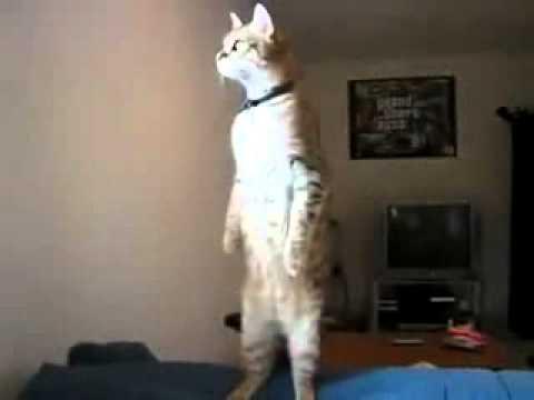 нереальная стойка кота
