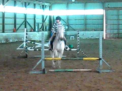Show Jumping Zebra Jumping a Full Grid With Zebra