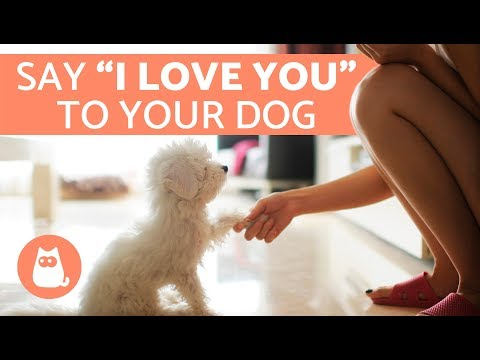 7 Ways to Tell a Dog You Love Them