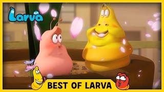 LARVA | BEST OF LARVA | Funny Cartoons for Kids | Cartoons For Children | LARVA 2017 WEEK 14
