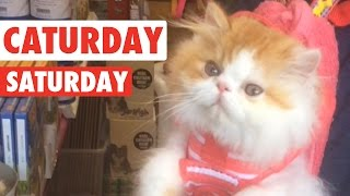 【Caturday】休日が待ち遠しい・・・土曜日は猫曜日♪