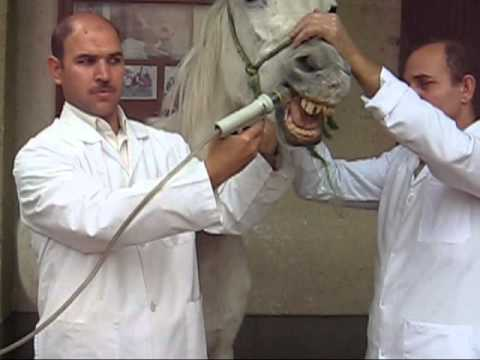 Drenching Gun Drenching Gun in Horse