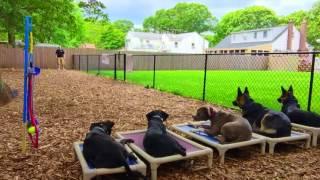 New York Dog Trainer: Doberman/Rottie Mix with an Amazing Transformation