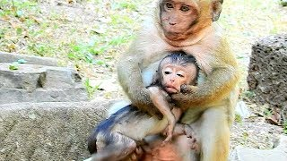 OMG, Does sweet Pea Want To kill Baby Monkey? Why Sweet Pea Do Like This On Baby Monkey?