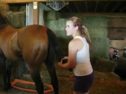 How To Wrap Your Horse's Tail : With Special Guest, EquitationPrincess!