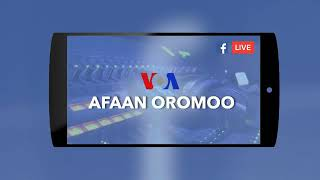 BREAKING NEWS VOA AFAAN OROMOO TODAY