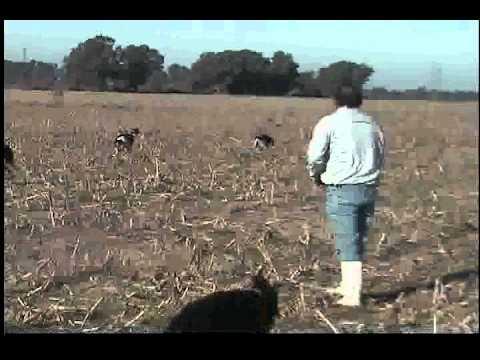 caza con galgos en argentina el taka cabeza y cholo