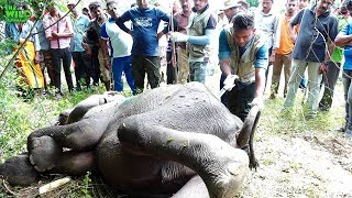 Elephant found losing its life until Good Samaritans came to help