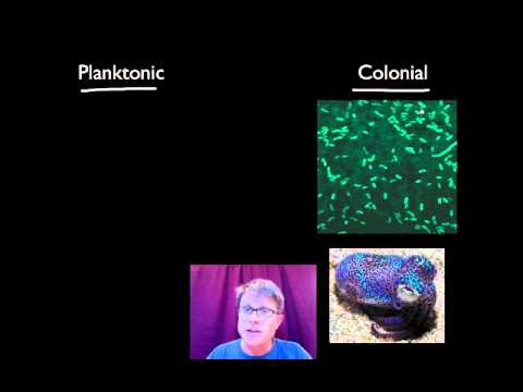 Evolutionary Significance of Cell Communication