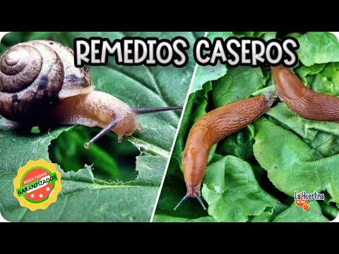10 Metodos Contra Los Caracoles Y Babosas || Caseros Y Ecologicos || La Huertina De Toni