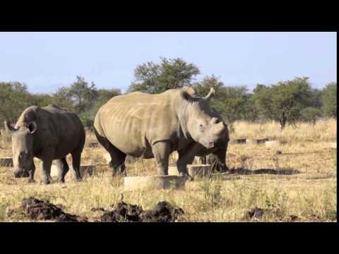 The Rhino-Poaching Crisis in South Africa
