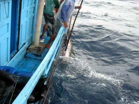 Game   Câu cá ngừ đại dương 1   Cau ca ngu dai duong 1