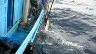 Game | Câu cá ngừ đại dương 1 | Cau ca ngu dai duong 1