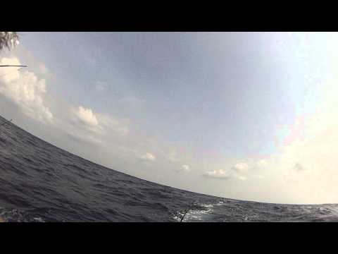 Dolphin fishing off Hatteras