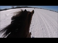 Download Beautiful Horseback Riding in Snow - Canadian Horse - Tomorrow in Mp3, Mp4 and 3GP