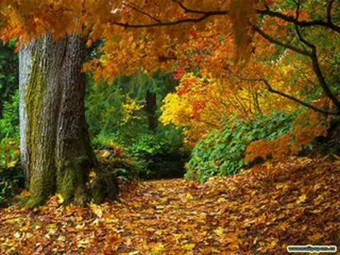 Richard Clayderman - Autumn Leaves Music Videos